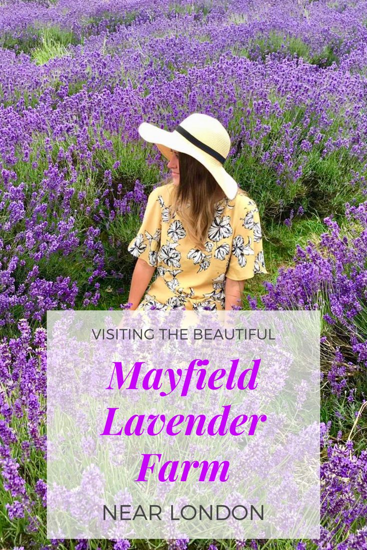 Visiting the beautiful Mayfield Lavender Farm