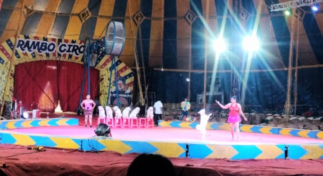 Dog's performance show at Rambo Circus Bangalore: Did not find it amusing