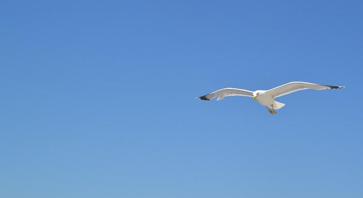 Free Bird- Poem - Be free