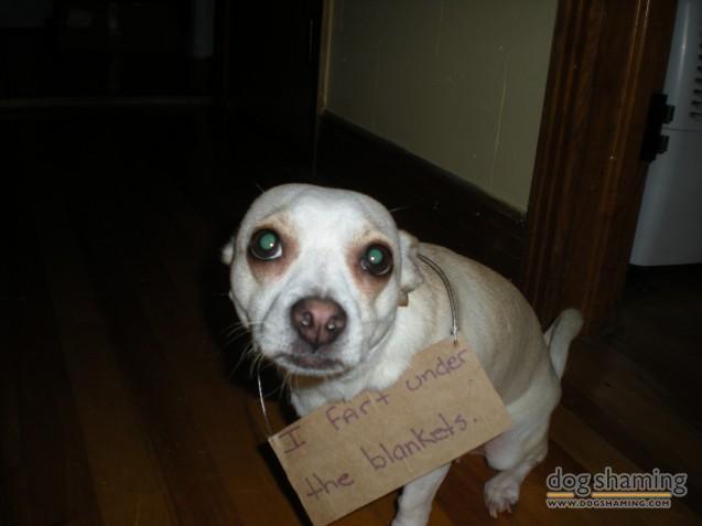 Photo courtesy of DogShaming.com