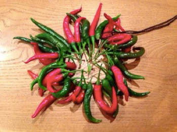 chillies6