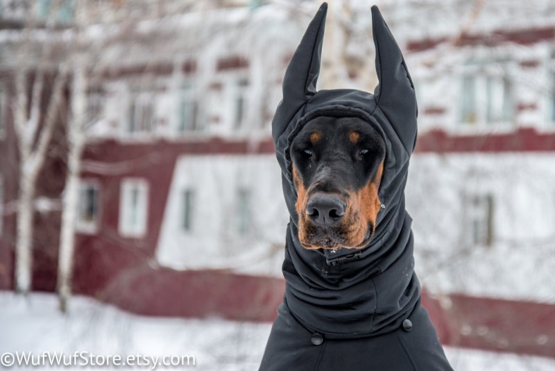 Avoid canine cabin fever with these winter dog walking tips