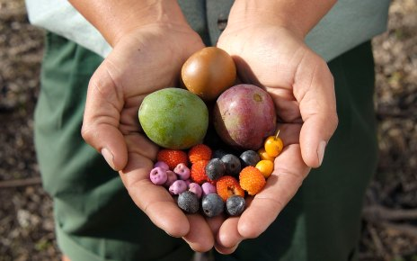 woman's hands holding native foods or bush tucker