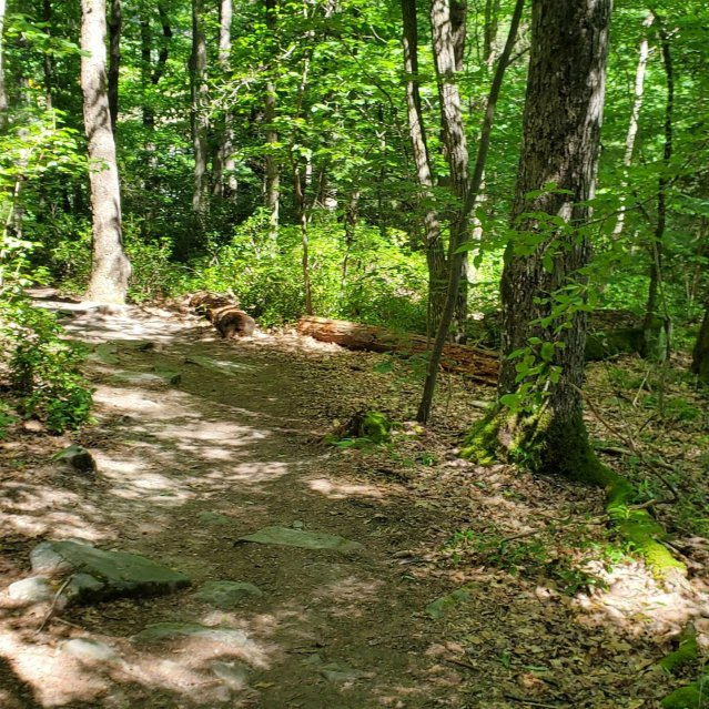 Ferncliff Trail