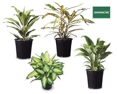 Indoor Plants 175mm Aldi Australia Specials Archive