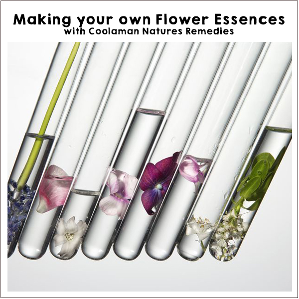 Flower Essence workshop Off-Grid Living Festival. Events Victoria