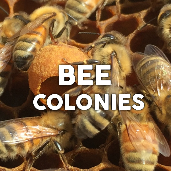 Learn about Bee Keeping