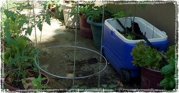 Garden in Different Containers