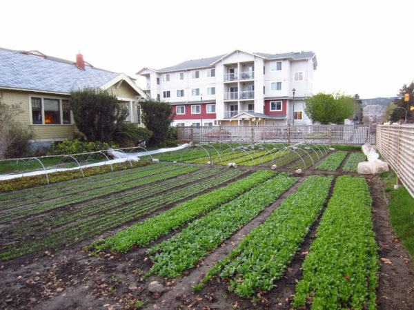 80k year farming 1 3 acre