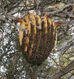 natural bee hive [ 1024 x 768 Pixel ]