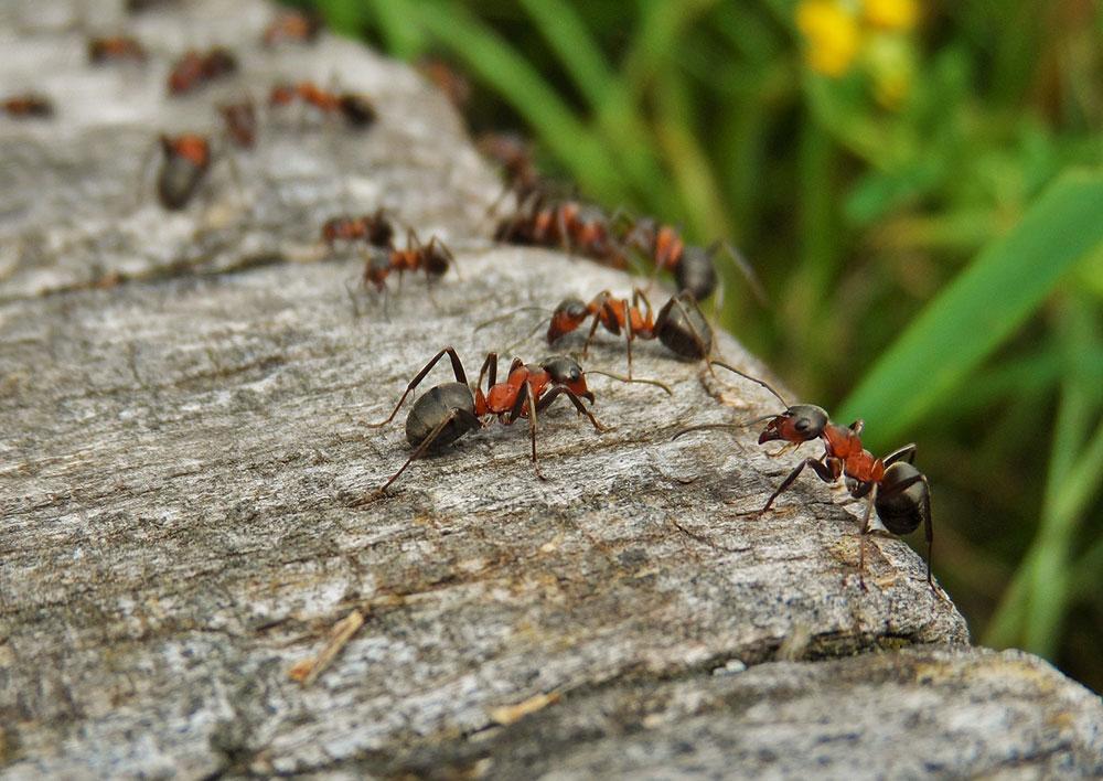 Biomimicry - ants