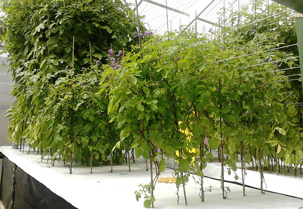 Benefits of aeroponic growing