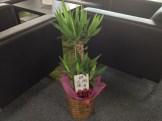 関くんと三浦くんから観葉植物をいただきました。ありがとうございます!