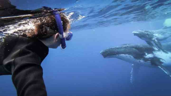 swim with whales in Tonga 15 scaled
