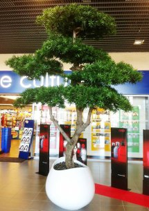 Tall Tree Rental Large Interior Trees Live & Artificial