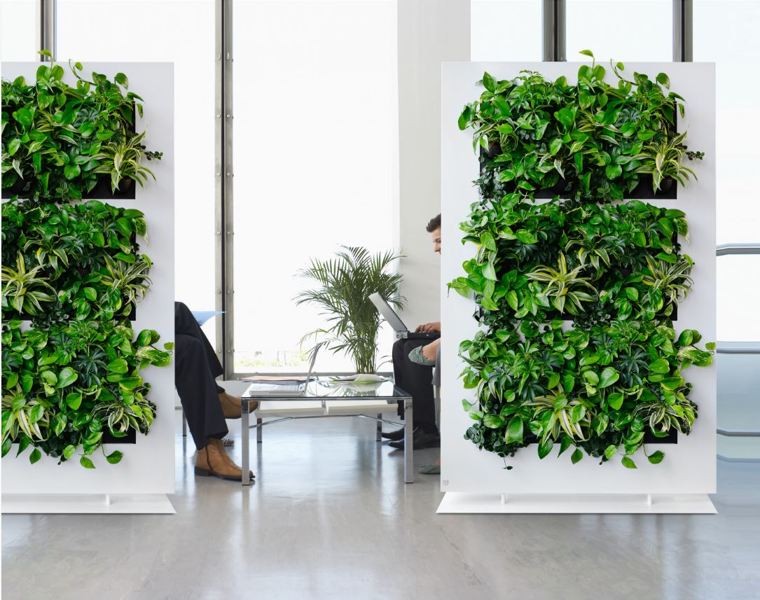 Images of Green Walls for offices  Office Landscapes