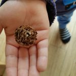 Pineky the pine cone - office mum