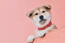 出張愛犬撮影