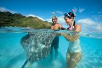 paul gauguin cruises cruise ship stingrays