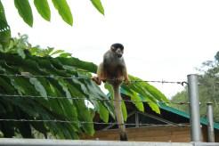 Windstar Cruises Star cruise ship shore tours monkey