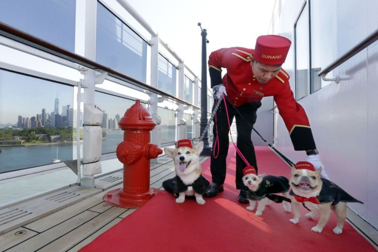 cunard cruises queen mary 2 dog walker with three dogs