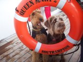 cunard dog cruises queen mary 2 ship
