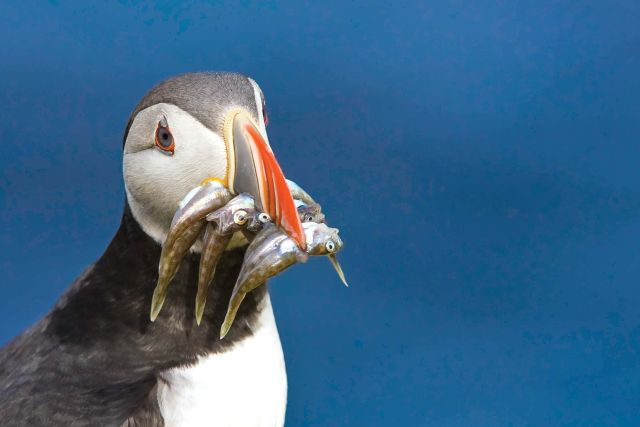 Lindblad Expeditions National Geographic cruise ship bird