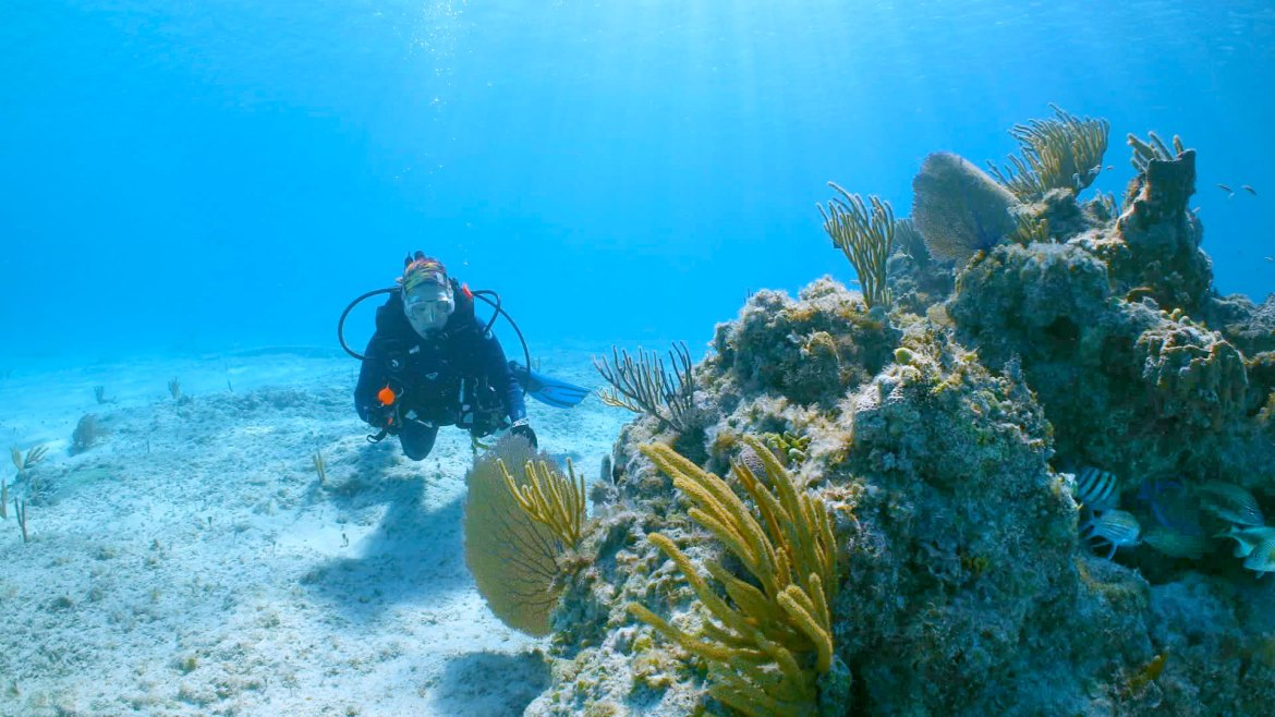 MSC Foundation to support Super Coral research at Ocean Cay island