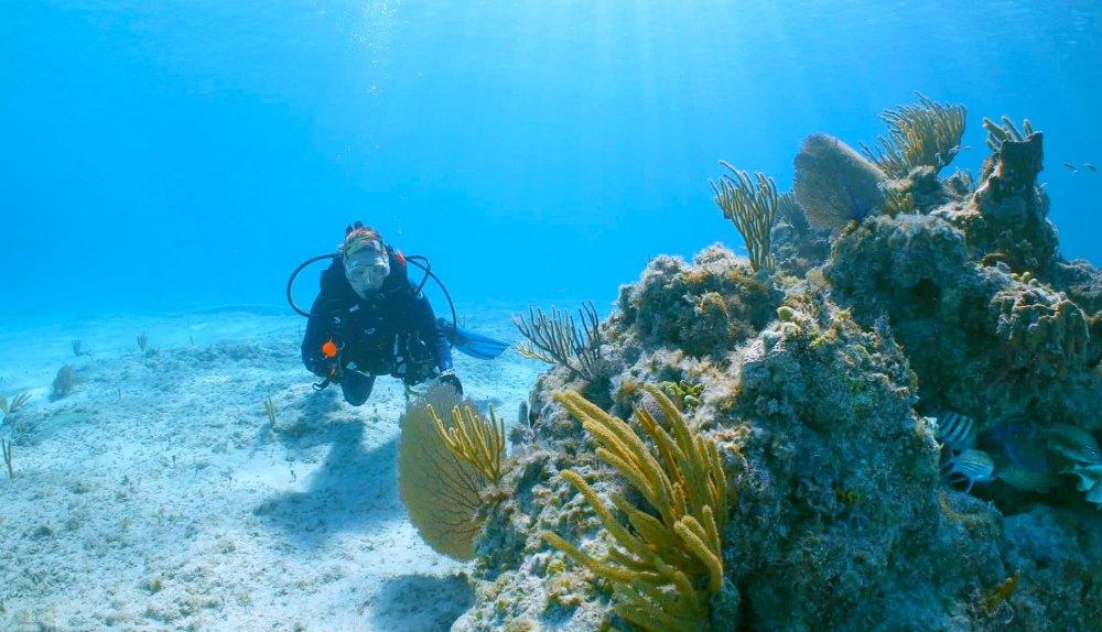 MSC Cruises Ocean Cay super coral research scuba diver