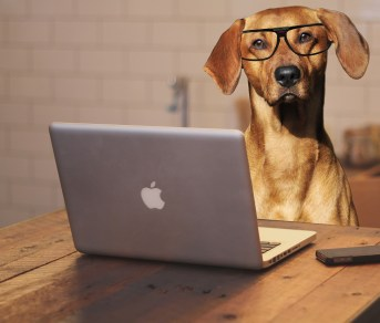 A dog sitting at a laptop using it's brain with glasses on