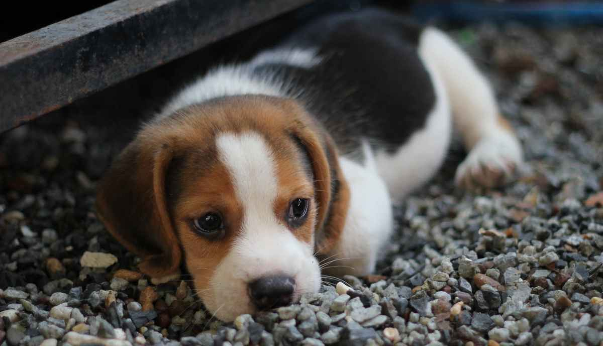 How To Potty Train A Puppy While You Work