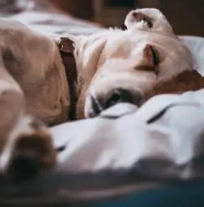 How can i help my puppy sleep through the night