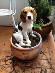 Dog sitting on a plant pot