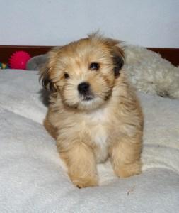 A cute fluffy puppy