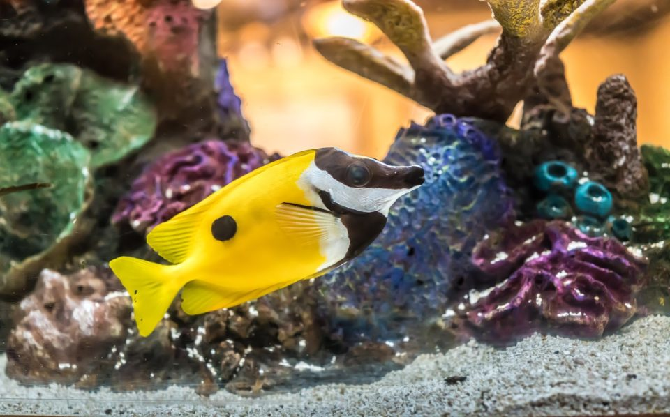 What Tropical Fish Can Be Kept Together? - 7 Types of ...