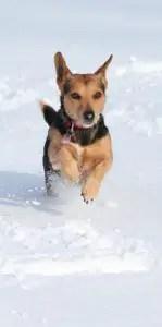 Dog bounding around in snow