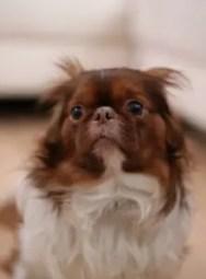 A scared dog