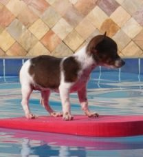 Dog on water