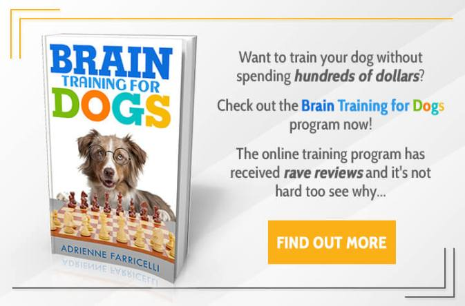 Brain Training 4 Dogs Financial Services Coupon
