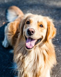 A smiling dog