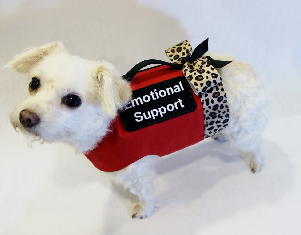 Why Emotional Support Animals Are Important