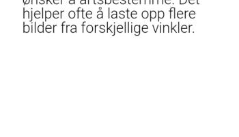 Screenshot of Orakelet Apk