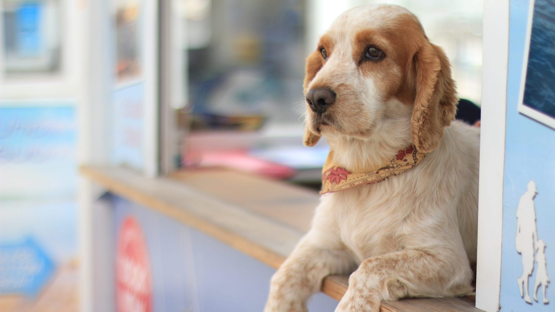 Guide To Pet Friendly Getaways Near Nyc Offmetro Ny