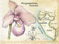 Orchidmain_1