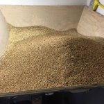 maris otter grains in hopper