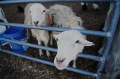 farm 2 http://offshoots12.com