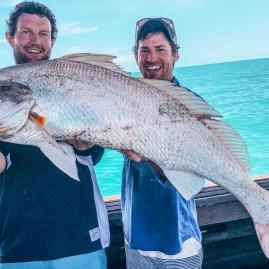 Big Black Jewfish with Offshore Boats | Darwin Fishing Charters