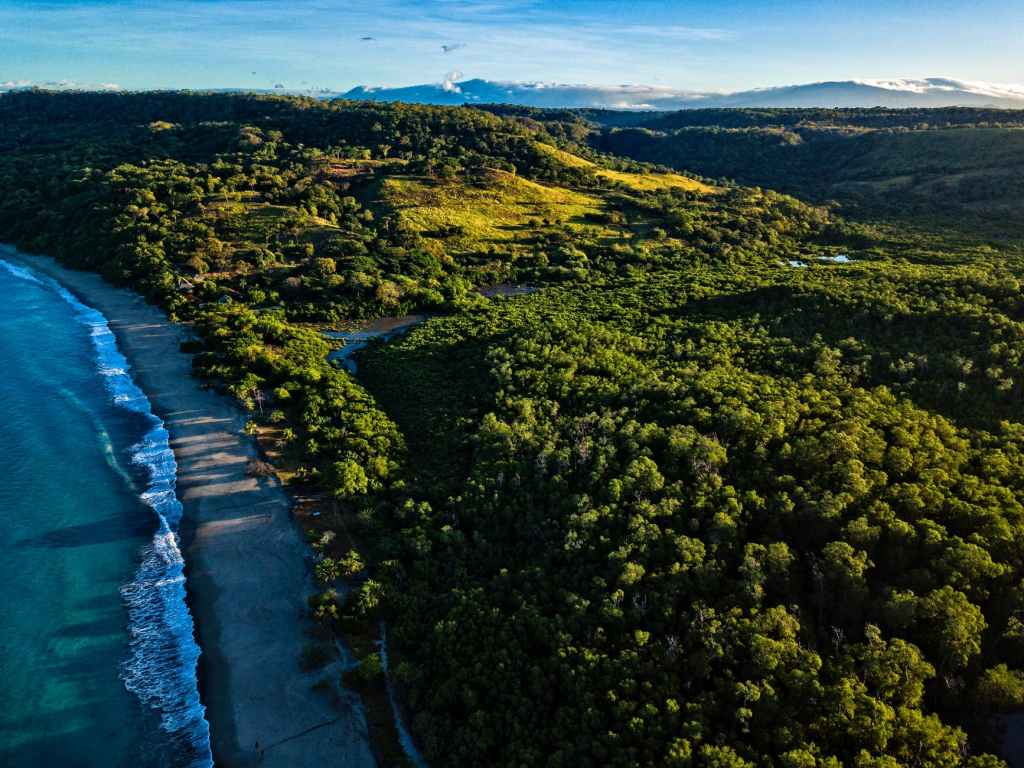 aerial photo of trees near beach