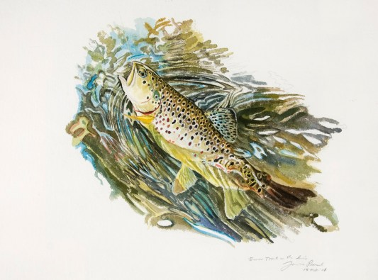 James Prosek (Brown Trout on Line)
