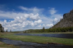 Madison River, a walk from the campground